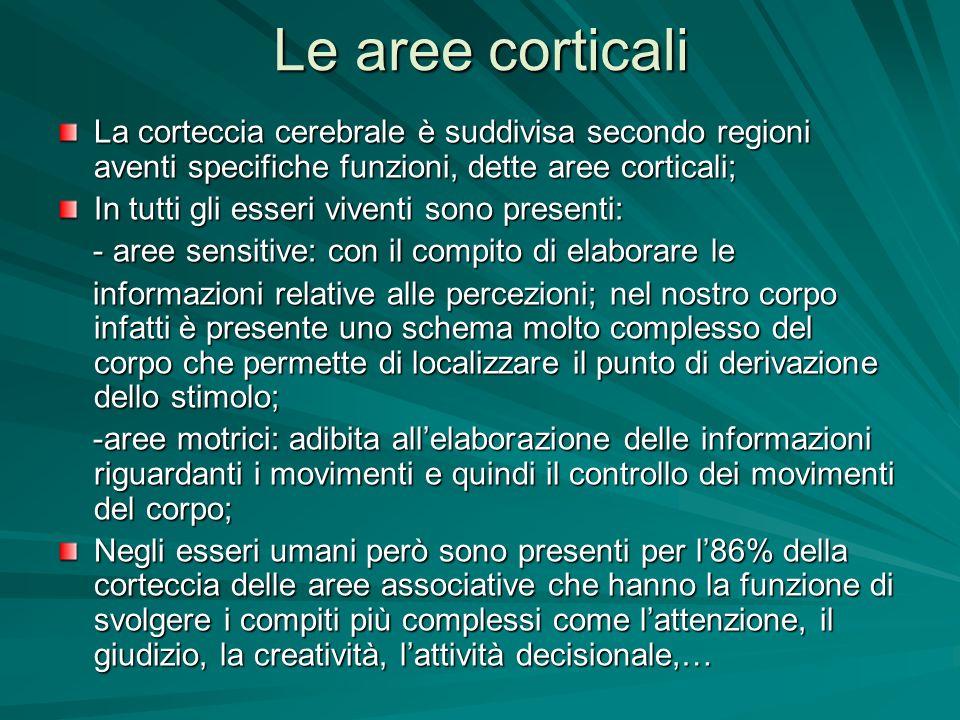 Le aree corticali La corteccia cerebrale è suddivisa secondo regioni aventi specifiche funzioni, dette aree corticali;
