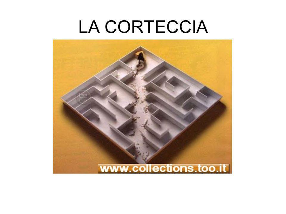 LA CORTECCIA
