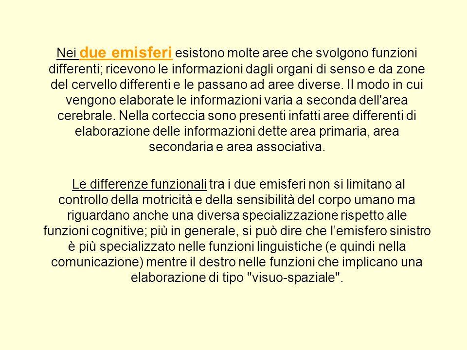 Nei due emisferi esistono molte aree che svolgono funzioni differenti; ricevono le informazioni dagli organi di senso e da zone del cervello differenti e le passano ad aree diverse. Il modo in cui vengono elaborate le informazioni varia a seconda dell area cerebrale. Nella corteccia sono presenti infatti aree differenti di elaborazione delle informazioni dette area primaria, area secondaria e area associativa.