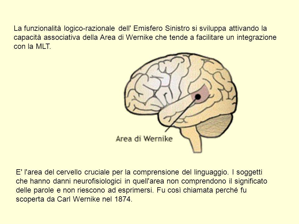 La funzionalità logico-razionale dell Emisfero Sinistro si sviluppa attivando la capacità associativa della Area di Wernike che tende a facilitare un integrazione con la MLT.
