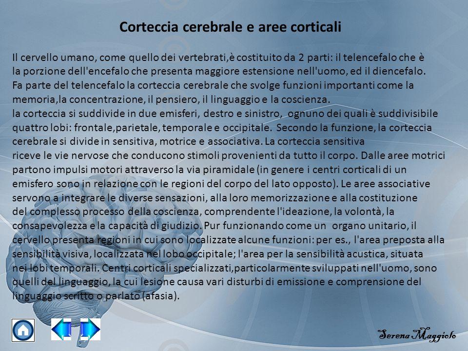 Corteccia cerebrale e aree corticali