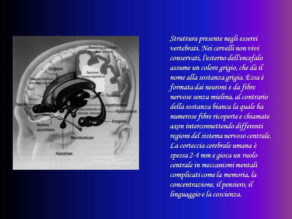 Struttura presente negli esserei vertebrati