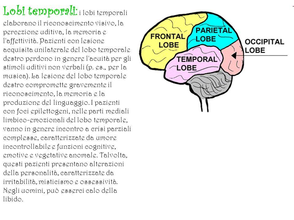 Lobi temporali: i lobi temporali elaborano il riconoscimento visivo, la percezione uditiva, la memoria e l affettività.