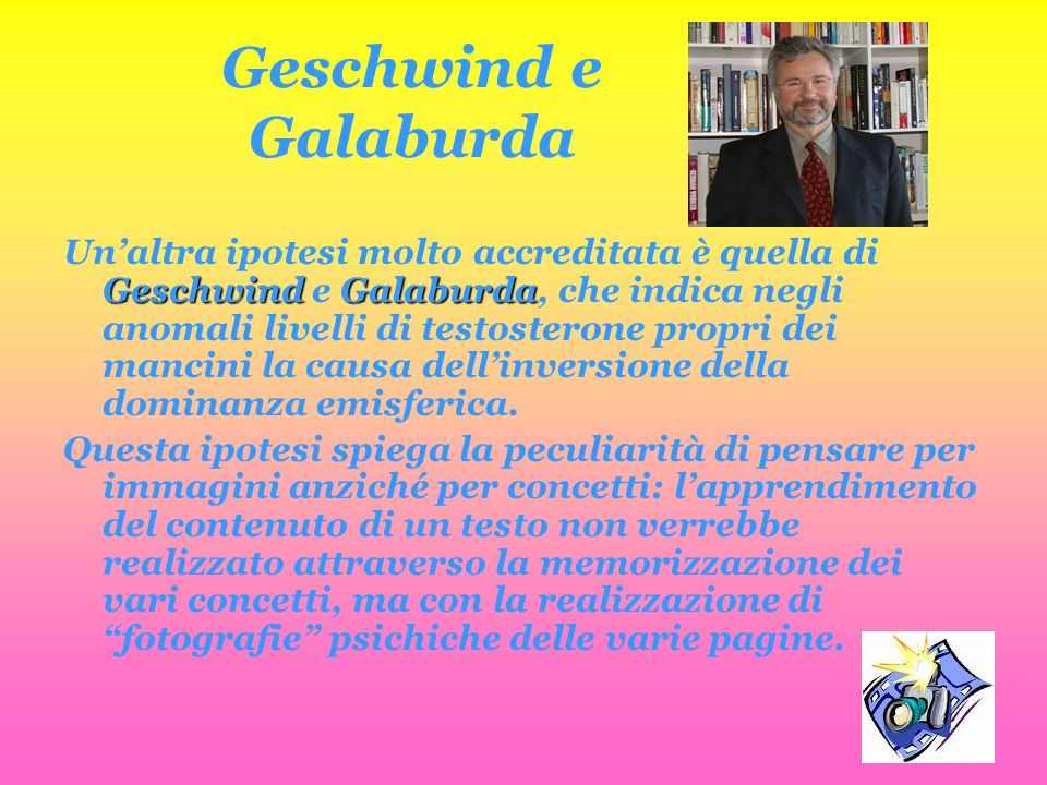 Geschwind e Galaburda