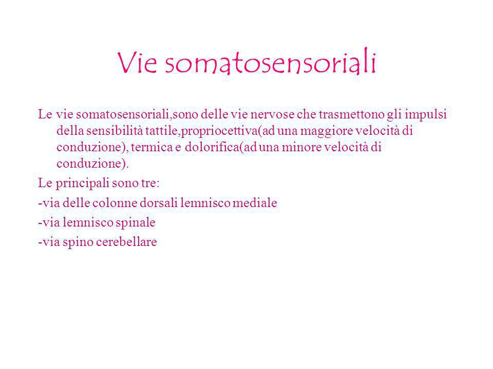 Vie somatosensoriali