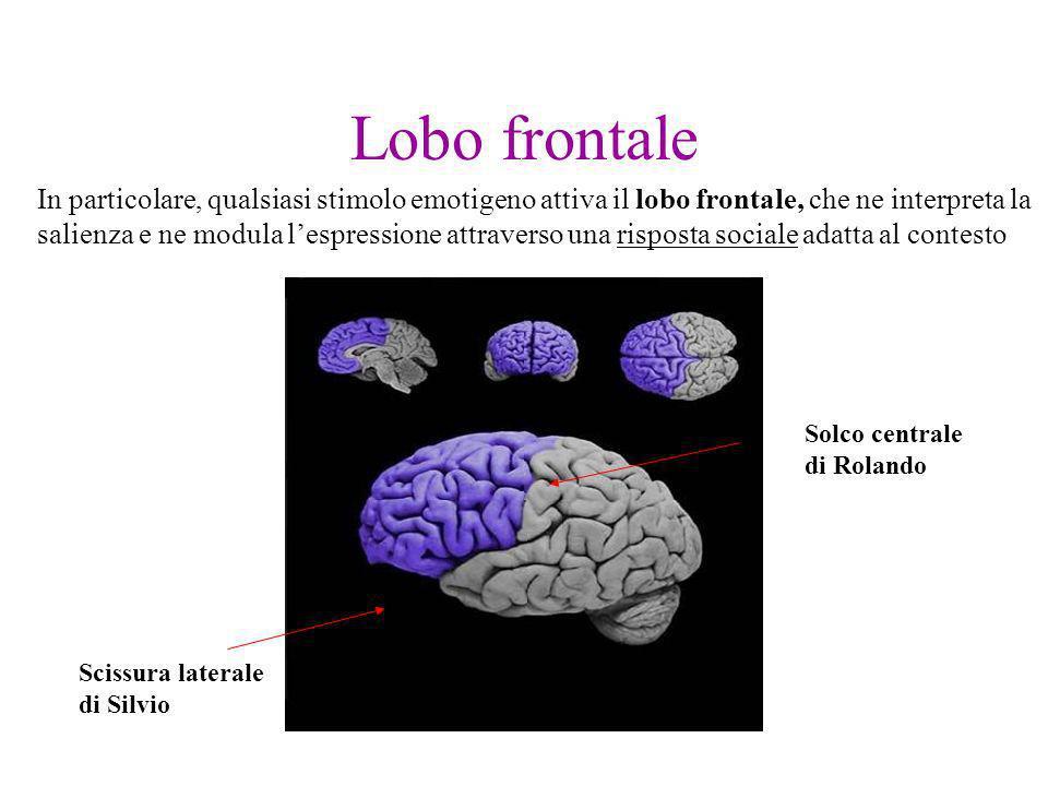 Lobo frontale