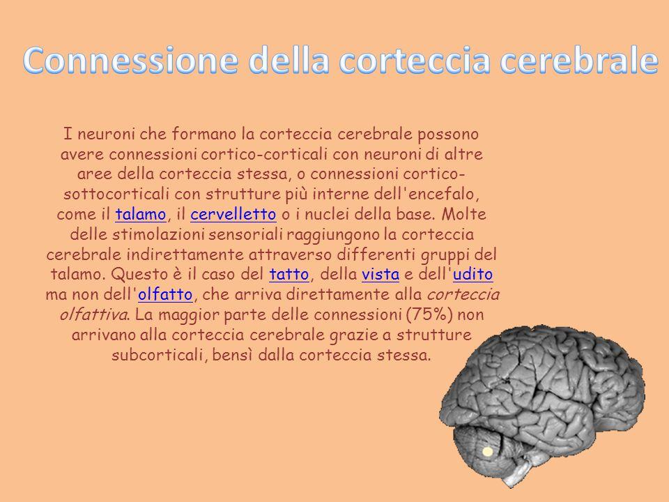 Connessione della corteccia cerebrale