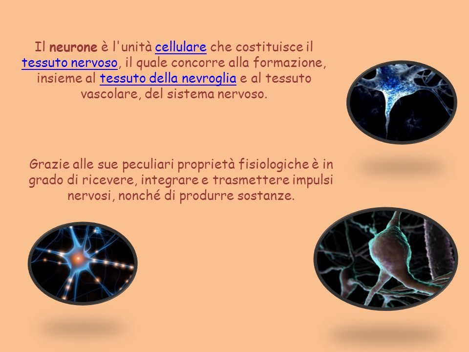 Il neurone è l unità cellulare che costituisce il tessuto nervoso, il quale concorre alla formazione, insieme al tessuto della nevroglia e al tessuto vascolare, del sistema nervoso.