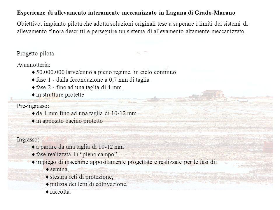 Esperienze di allevamento interamente meccanizzato in Laguna di Grado-Marano