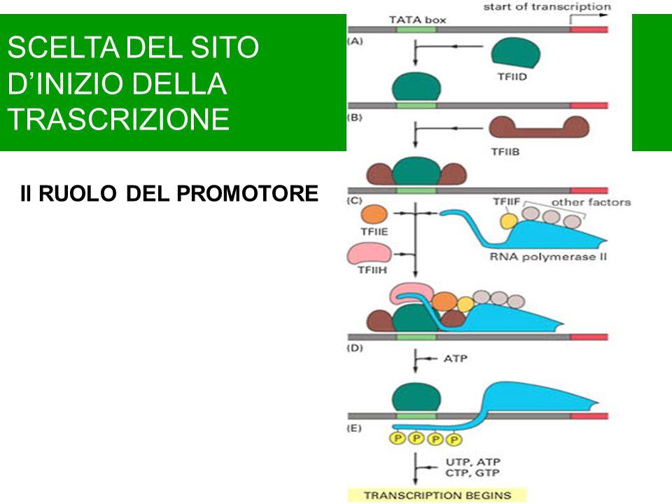 Corso di biologia programma ppt video online scaricare for Piani del sito online