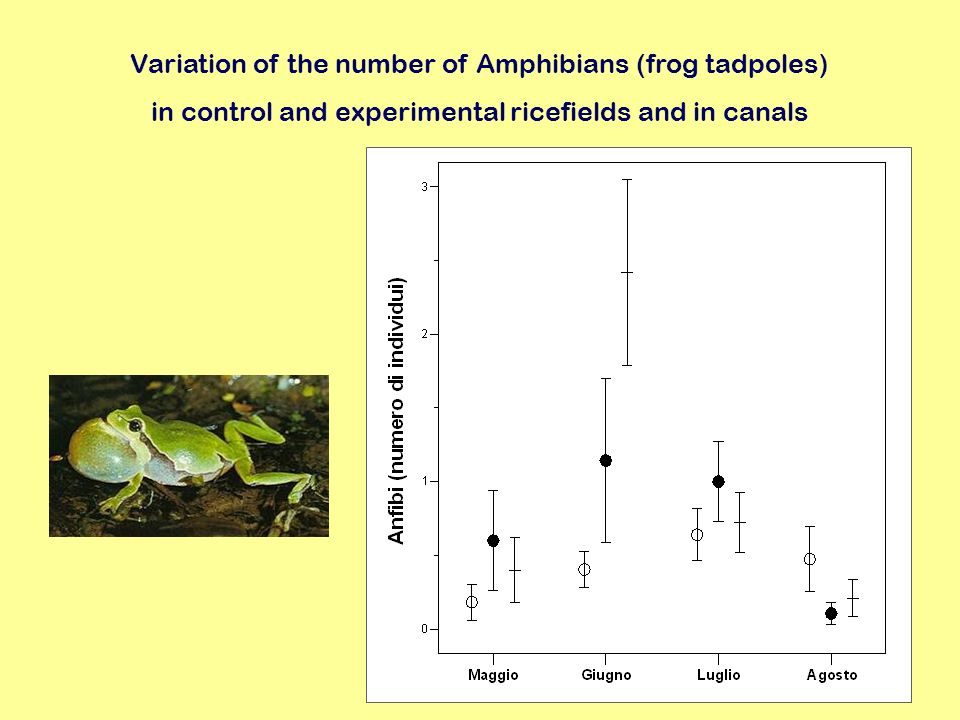 Variation of the number of Amphibians (frog tadpoles)