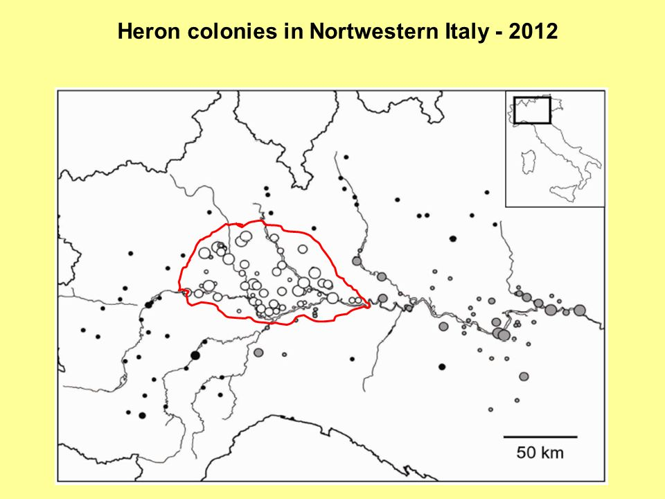 Heron colonies in Nortwestern Italy - 2012