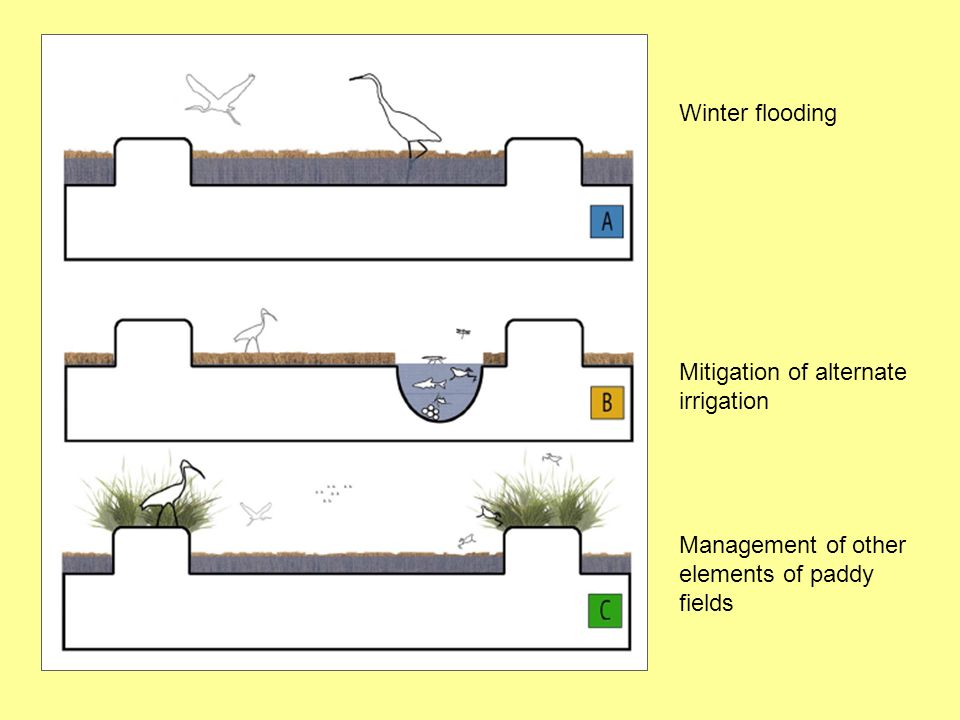 Winter flooding Mitigation of alternate irrigation Management of other elements of paddy fields