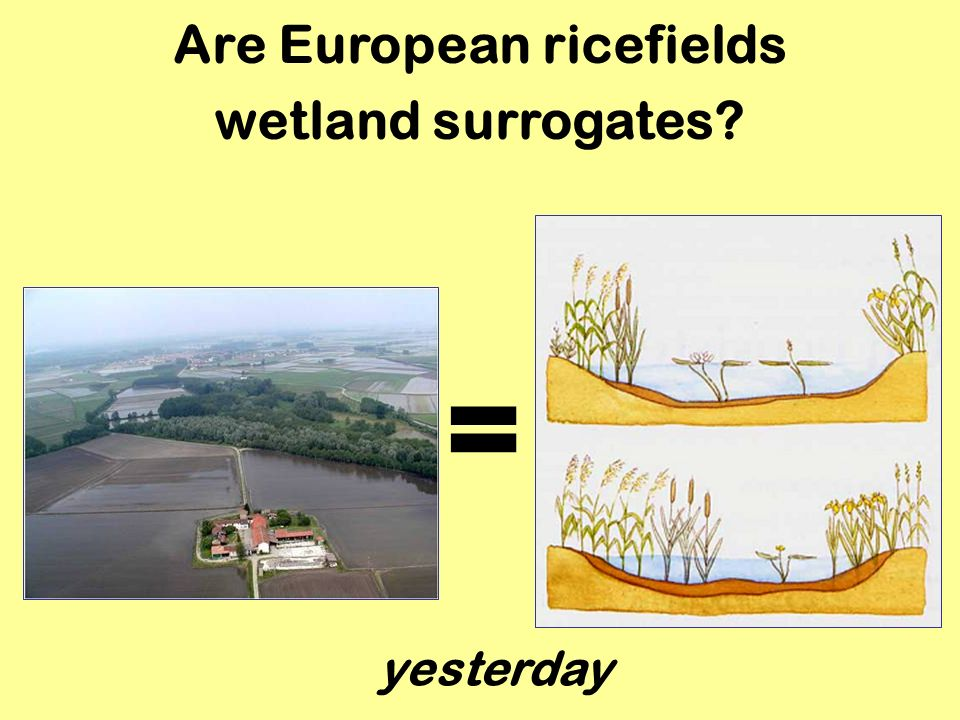 Are European ricefields