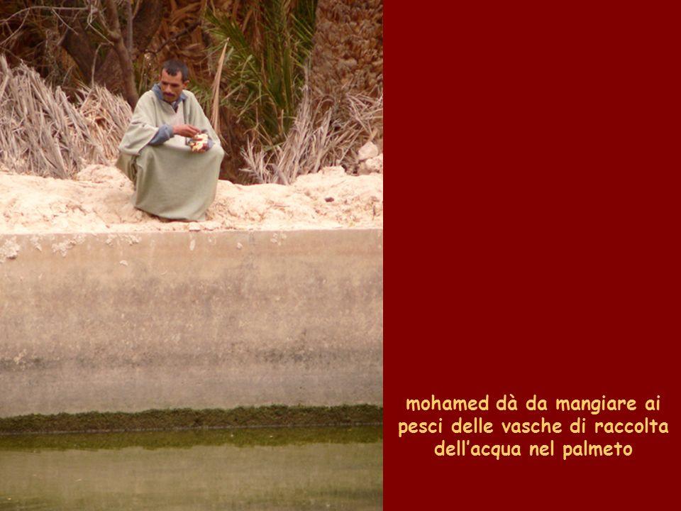mohamed dà da mangiare ai pesci delle vasche di raccolta dell'acqua nel palmeto
