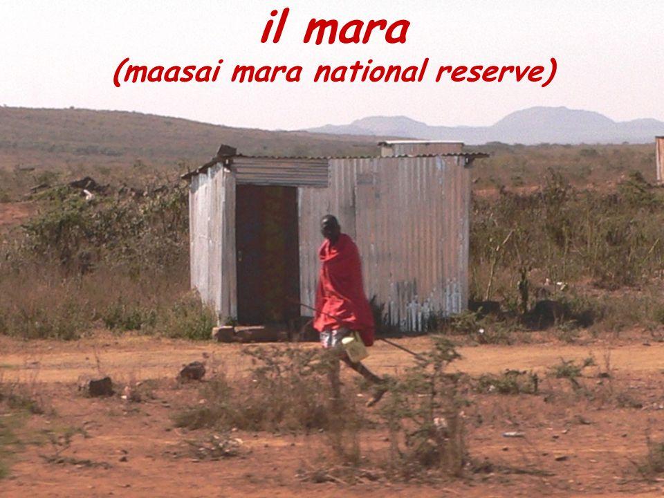 (maasai mara national reserve)