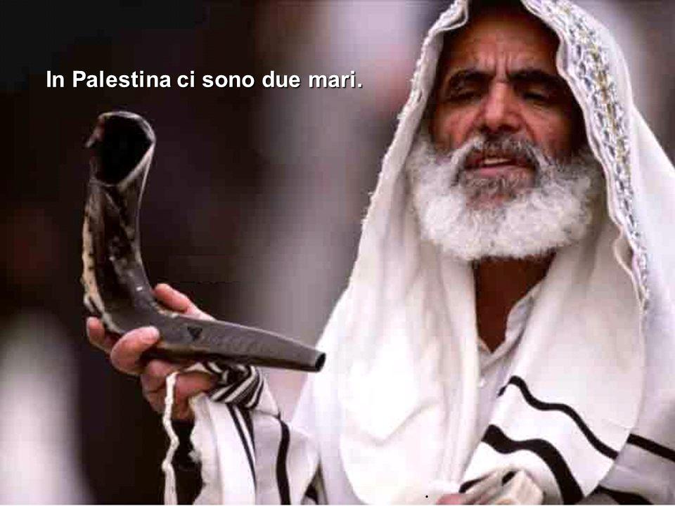 In Palestina ci sono due mari.