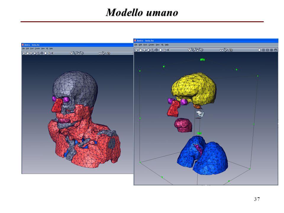 Modello umano 37