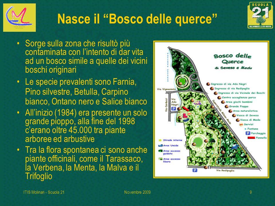 Nasce il Bosco delle querce