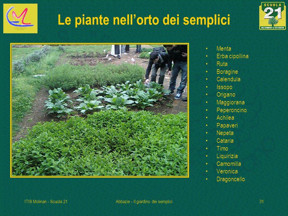 Le piante nell'orto dei semplici