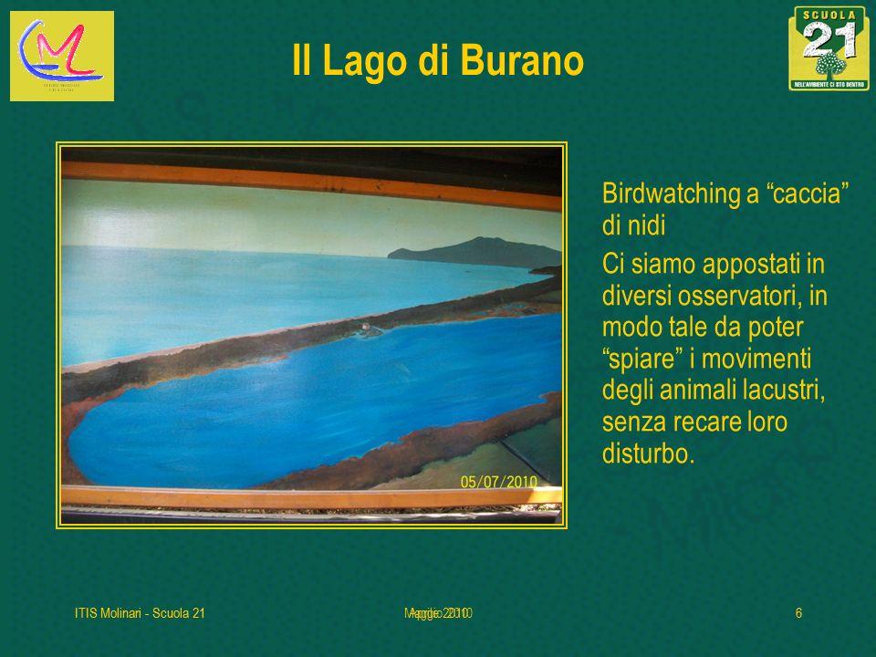 Il Lago di Burano Birdwatching a caccia di nidi