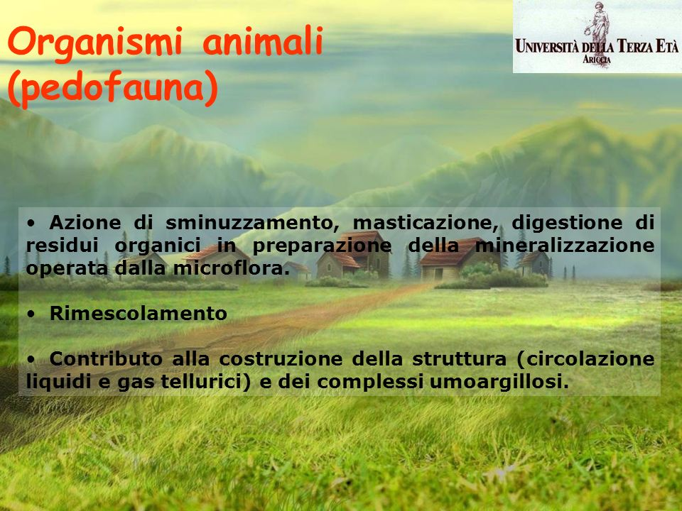 Organismi animali (pedofauna)