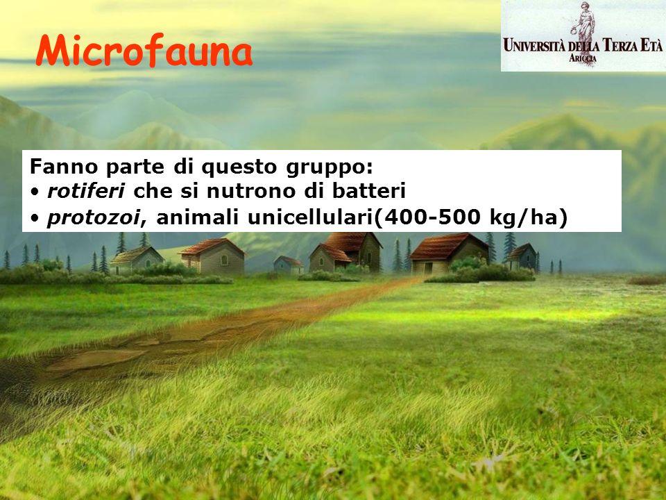 Microfauna Fanno parte di questo gruppo: