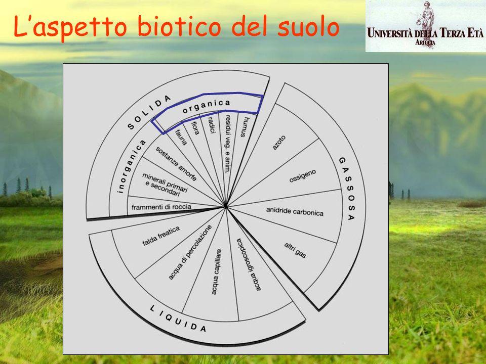 L'aspetto biotico del suolo