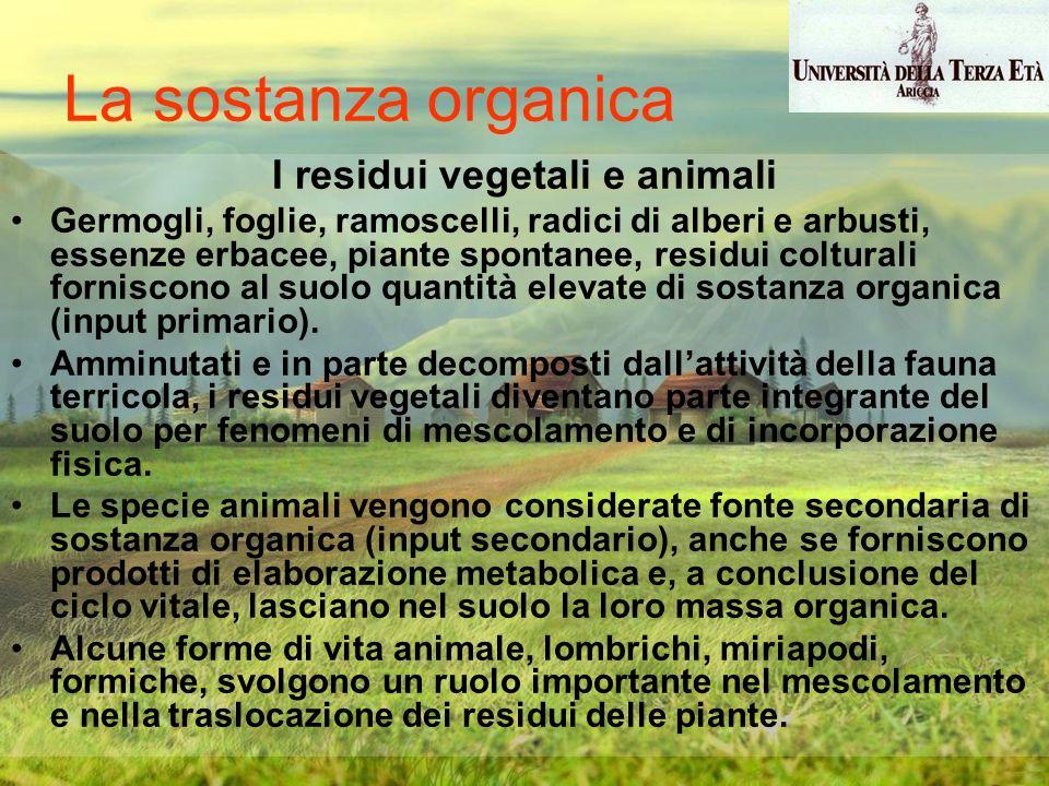 I residui vegetali e animali