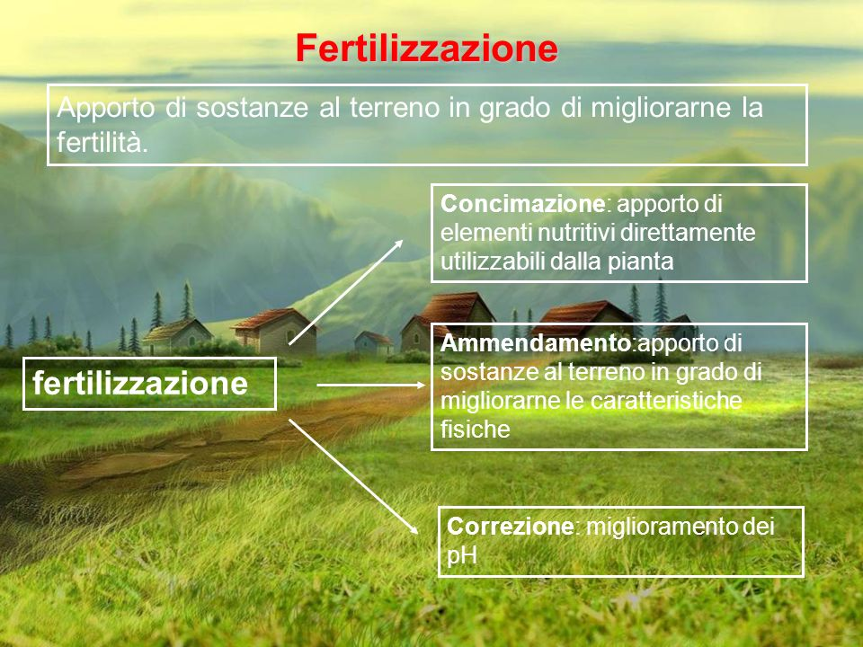 Fertilizzazione fertilizzazione