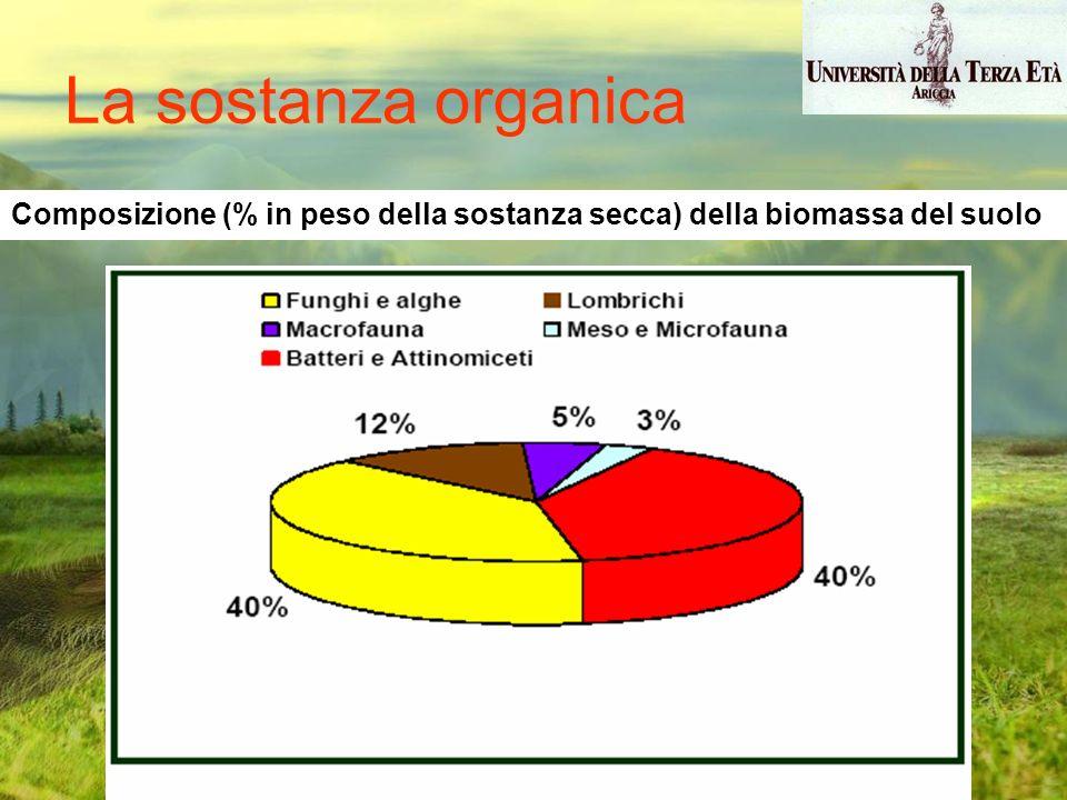 La sostanza organica Composizione (% in peso della sostanza secca) della biomassa del suolo
