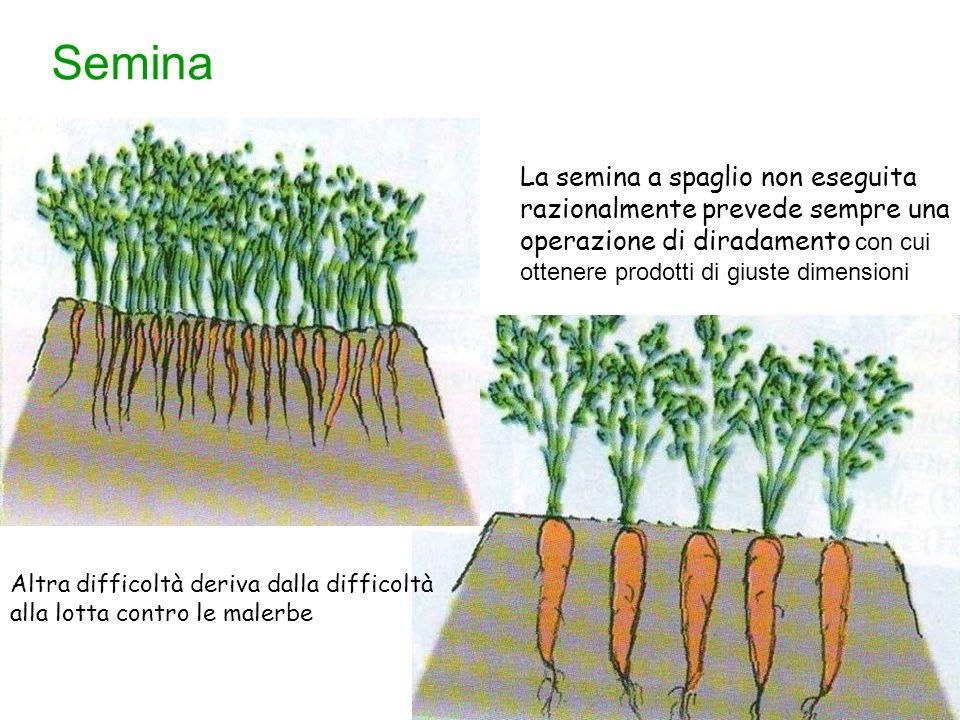 Semina principali avversit delle piante ppt scaricare for Semina a spaglio