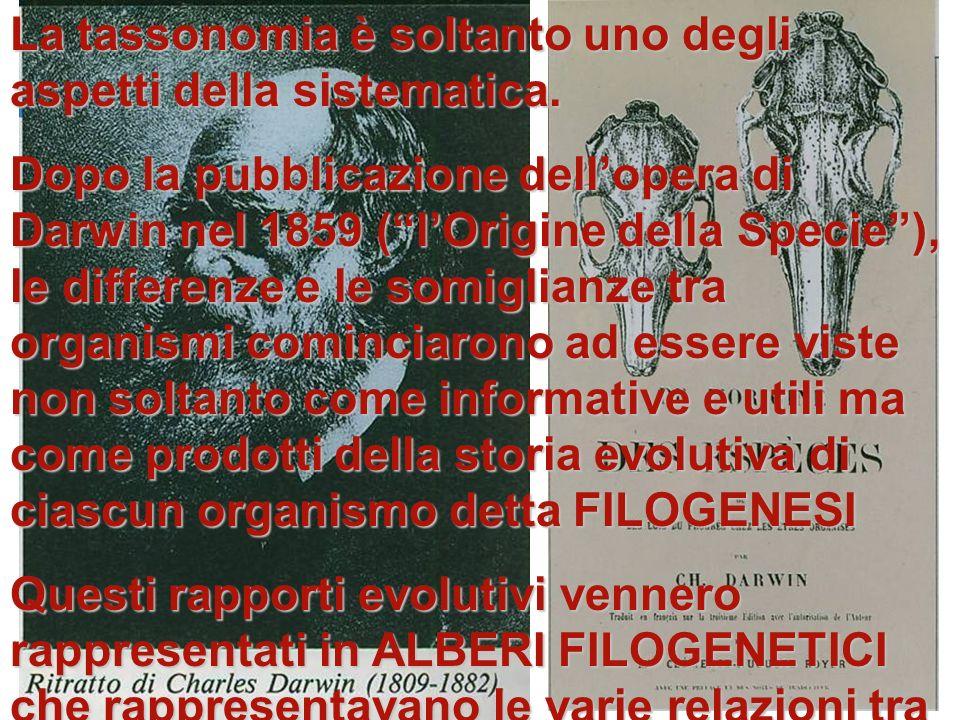La tassonomia è soltanto uno degli aspetti della sistematica.