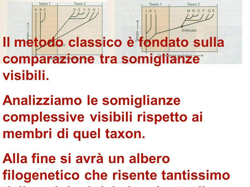 Il metodo classico è fondato sulla comparazione tra somiglianze visibili.