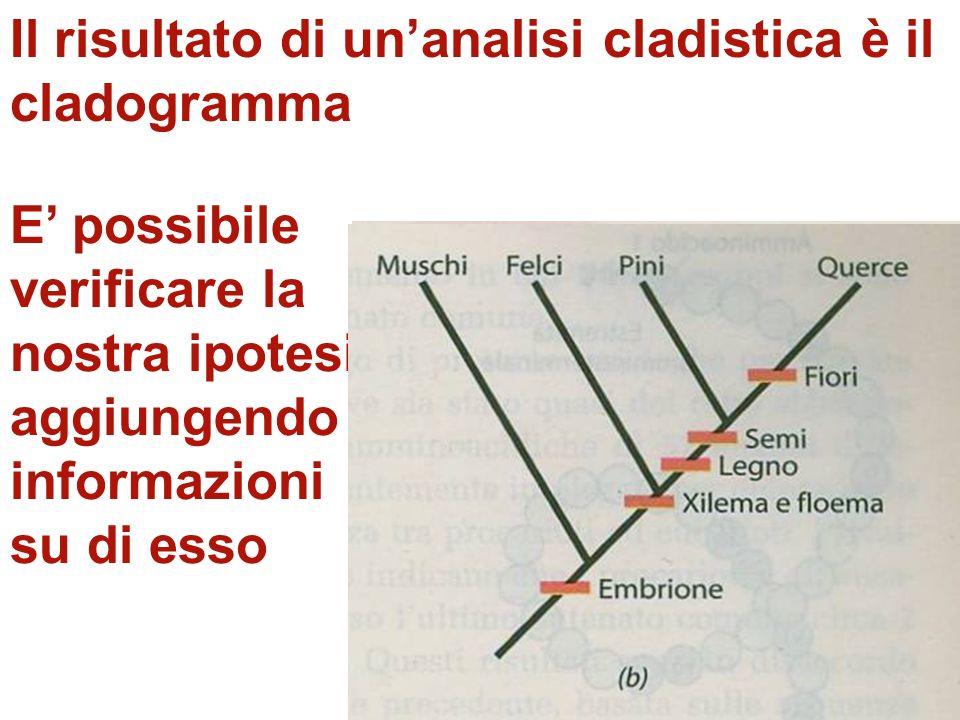 Il risultato di un'analisi cladistica è il cladogramma