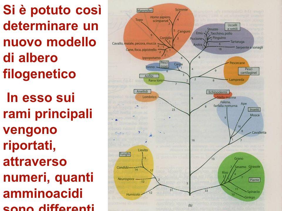 Si è potuto così determinare un nuovo modello di albero filogenetico