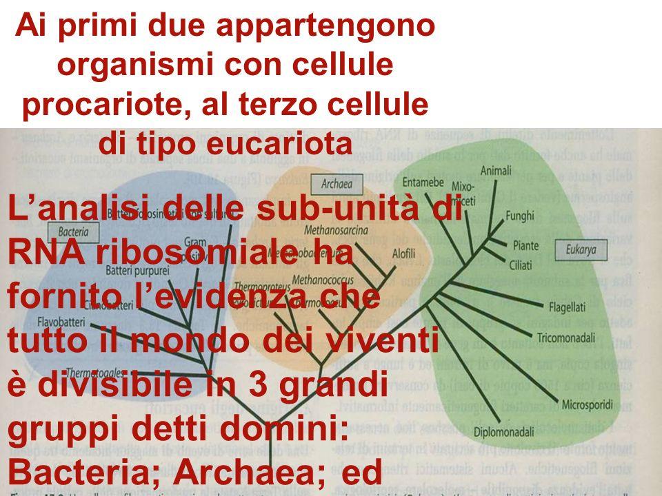L'analisi delle sub-unità di RNA ribosomiale ha fornito l'evidenza che tutto il mondo dei viventi è divisibile in 3 grandi gruppi detti domini: Bacteria; Archaea; ed Eukarya.