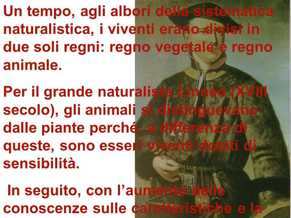 Un tempo, agli albori della sistematica naturalistica, i viventi erano divisi in due soli regni: regno vegetale e regno animale.