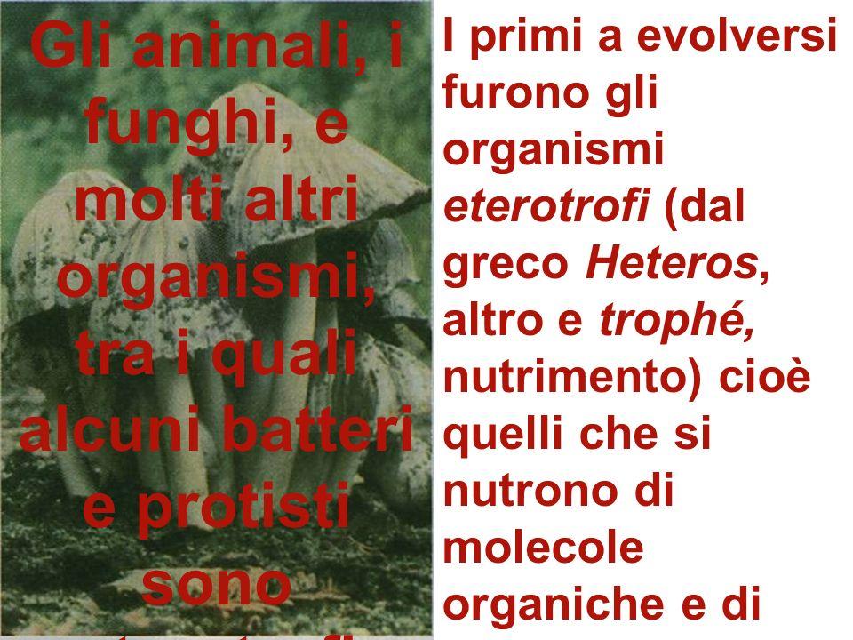 Gli animali, i funghi, e molti altri organismi, tra i quali alcuni batteri e protisti sono eterotrofi