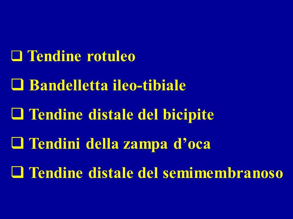 Bandelletta ileo-tibiale Tendine distale del bicipite