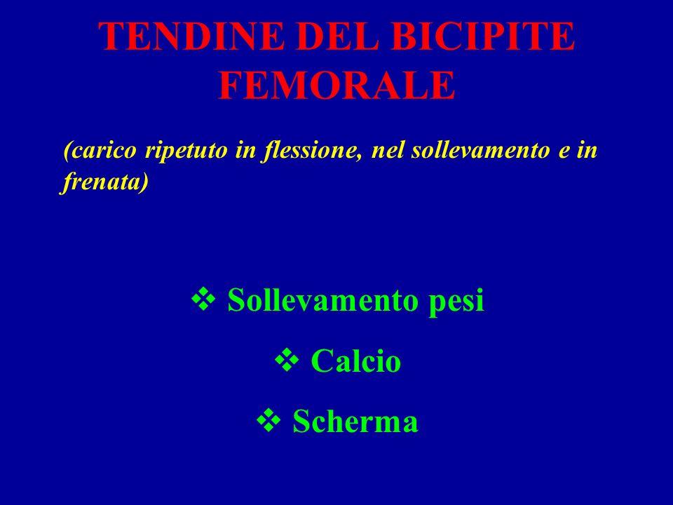 TENDINE DEL BICIPITE FEMORALE