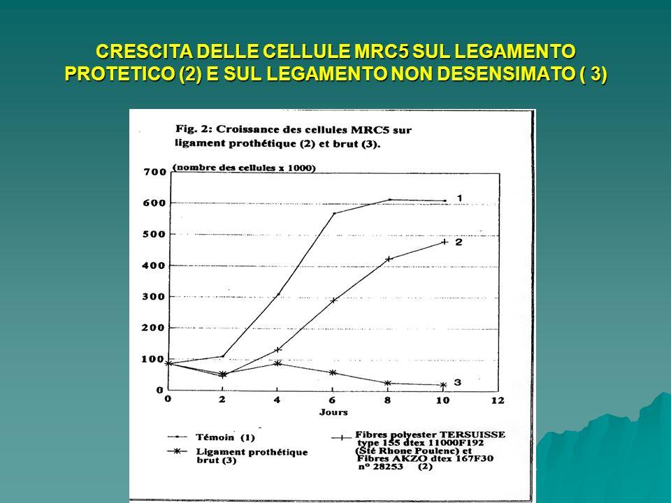 CRESCITA DELLE CELLULE MRC5 SUL LEGAMENTO PROTETICO (2) E SUL LEGAMENTO NON DESENSIMATO ( 3)