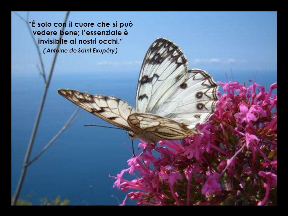 È solo con il cuore che si può vedere bene; l'essenziale è invisibile ai nostri occhi. ( Antoine de Saint Exupéry )