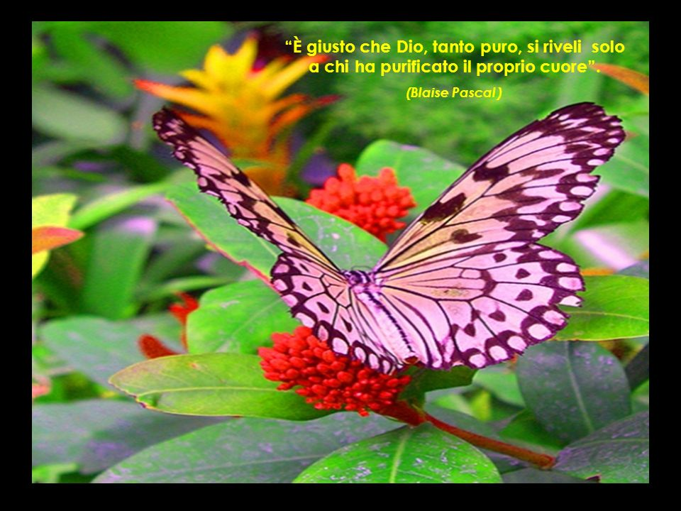 È giusto che Dio, tanto puro, si riveli solo a chi ha purificato il proprio cuore .