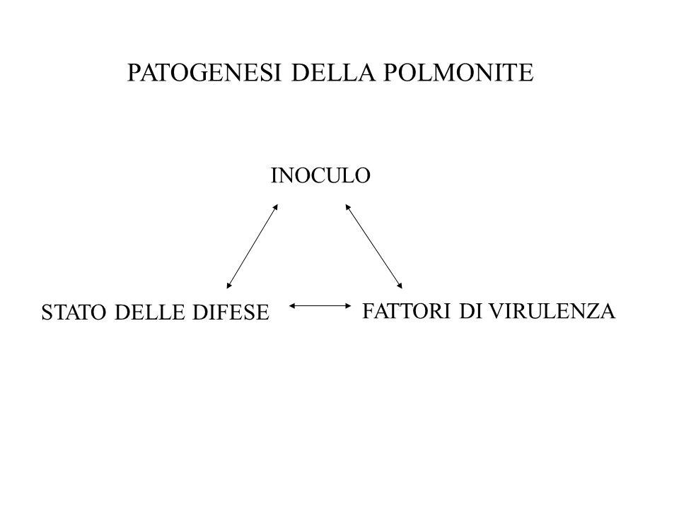 PATOGENESI DELLA POLMONITE
