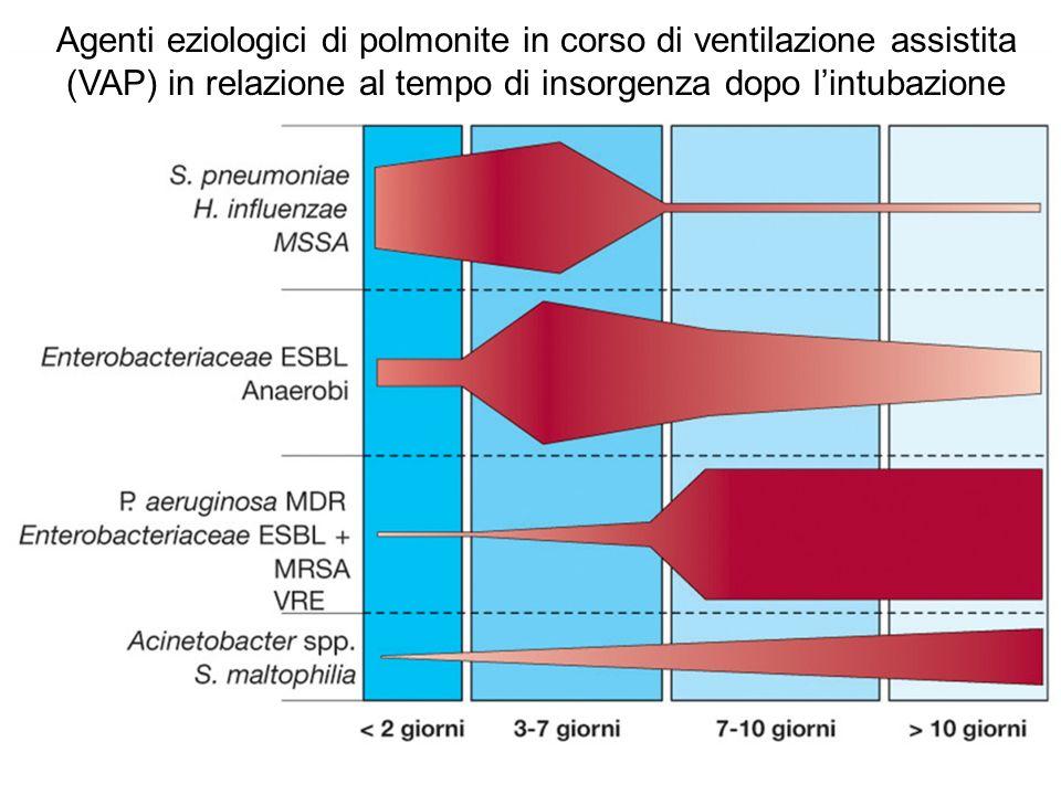 Agenti eziologici di polmonite in corso di ventilazione assistita (VAP) in relazione al tempo di insorgenza dopo l'intubazione