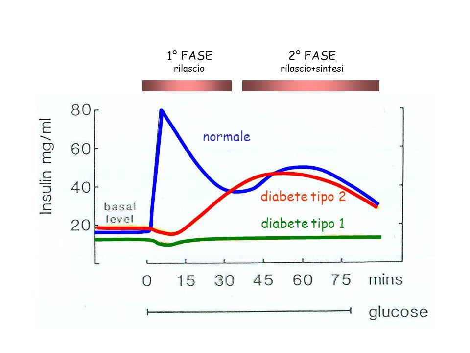 normale diabete tipo 2 diabete tipo 1 1° FASE 2° FASE rilascio