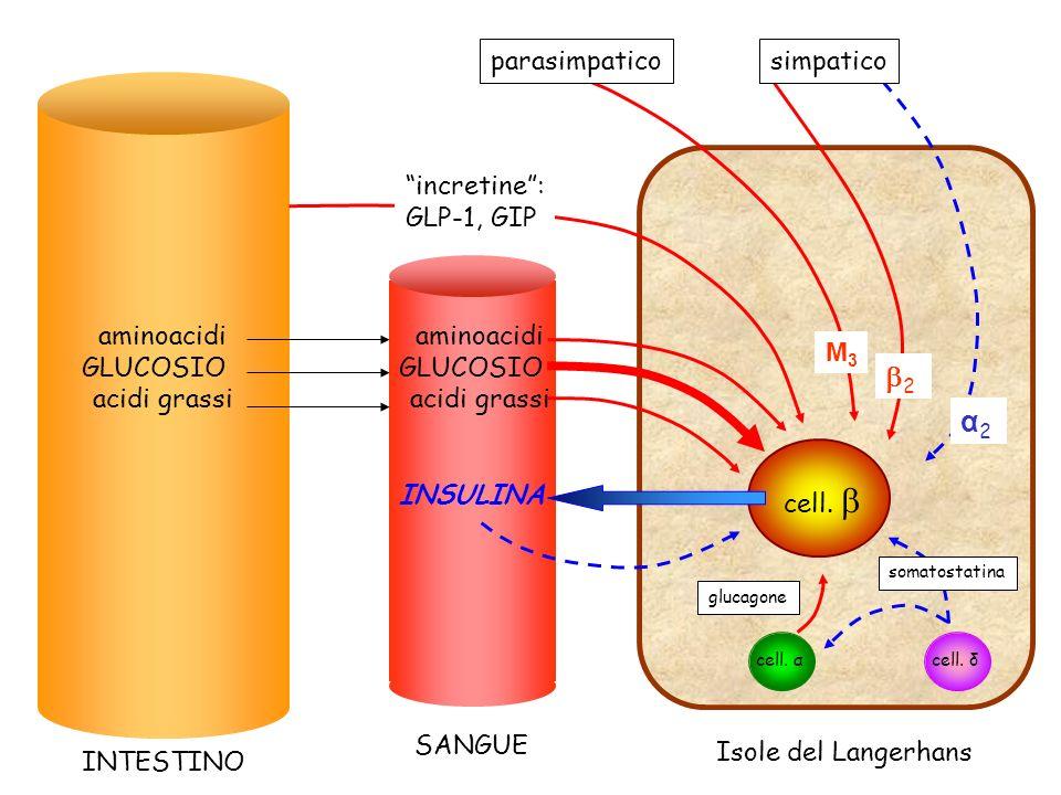 2 α2 parasimpatico simpatico incretine : GLP-1, GIP aminoacidi