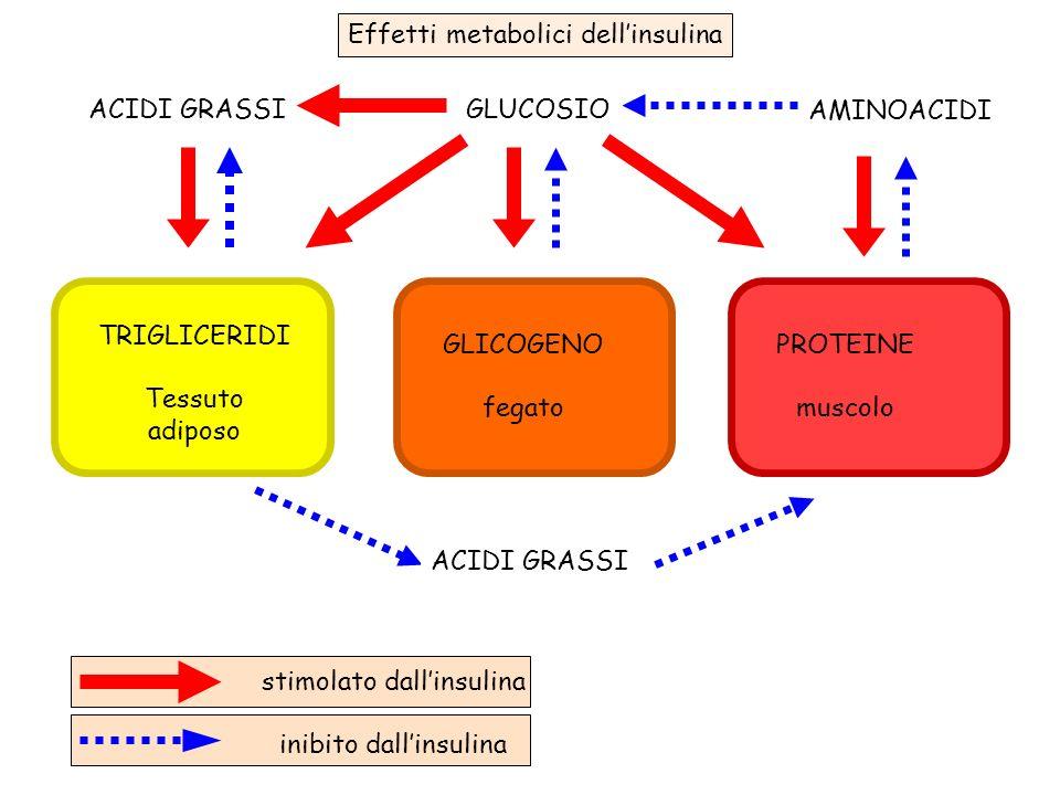 stimolato dall'insulina inibito dall'insulina