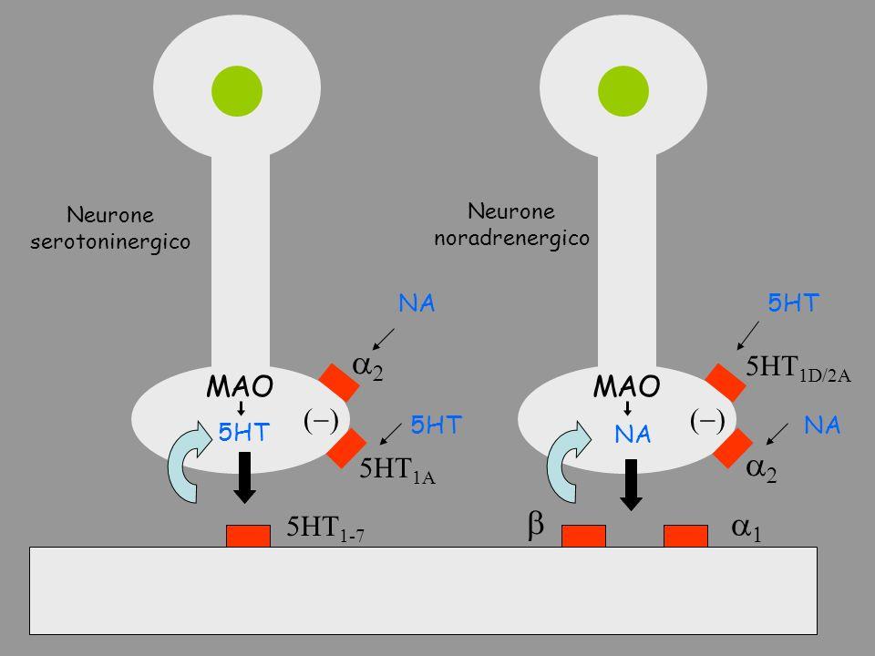 a2 b a1 5HT1D/2A MAO (-) 5HT1A 5HT1-7 5HT NA Neurone serotoninergico